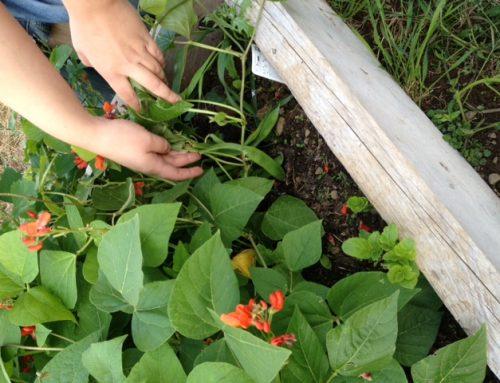 YAP Kildare Gardening Project