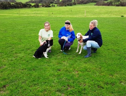 YAP Cork Young Person and Advocate Volunteer at the West Cork Animal Rescue Centre